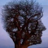Teoria karmei şi a reîncarnării. 2